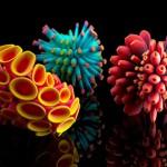 Colony_Nervous System_3d prints_Jessica Rosenkrantz_2